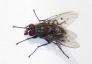 resized_unidentified_fly_1.jpg